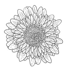 beautiful monochrome sketch black and white vector image