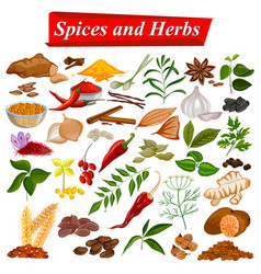 Full collection of aromatic spices and herbs used vector