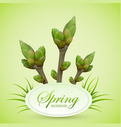 spring twigs on green background vector image