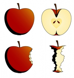 states of apples vector image vector image