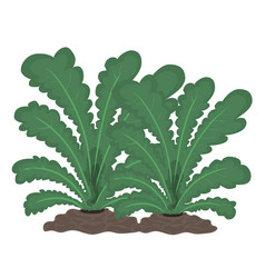 plants isolated vector image vector image