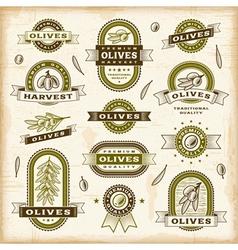 Vintage olive labels set vector image