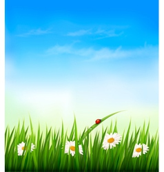 Spring background with sky flowers grass and a vector image vector image