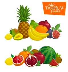 Exotic tropical fruits composition cartoon vector