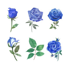 Bloom flower element design rose watercolor on vector