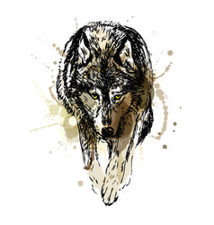 Colored hand sketch walking wolf vector