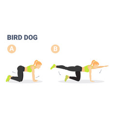 Female doing bird dog workout exercise guide vector