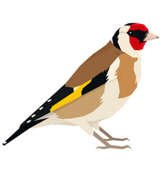 Goldfinch bird isolated object vector