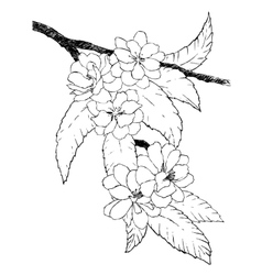 Hand drawn branch of oriental cherry vector image