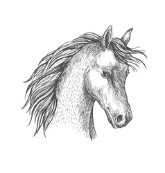 Head of arabian horse sketch symbol vector