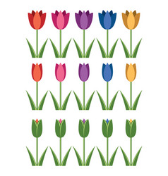 set colorful tulip icons abstract flower vector image