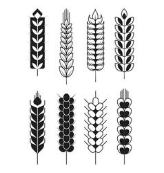 Spikelets icons or cereal wheat or rye ears and vector