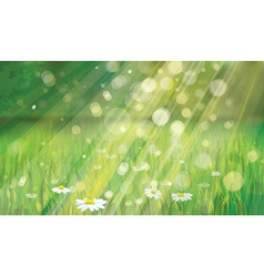 Spring background with white daisies vector