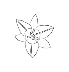 iris flower simple black lined icon on white vector image vector image