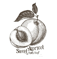 Apricot logo design template fruit or food vector