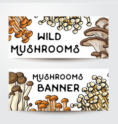 Banner design with various edible mushrooms and vector