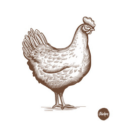 chicken hand drawn in engraving or vector image