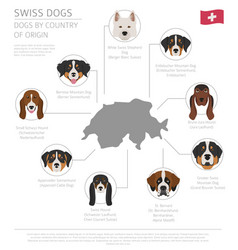 Dogs by country of origin swiss dog breeds vector