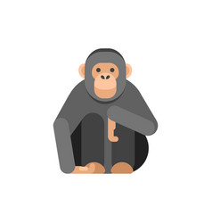 flat style of monkey vector image vector image