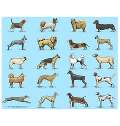 dog breeds engraved hand drawn vector image
