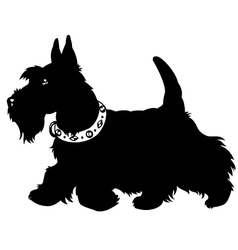 Scottish terrier black and white vector