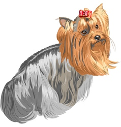 Yorkshire terrier vector image vector image