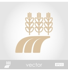 Ears of Wheat Barley or Rye on Field icon vector image