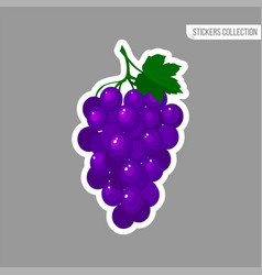 cartoon fresh grapes isolated sticker vector image
