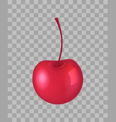 cherry closeup transparent vector image