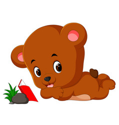 cute bear reading book vector image