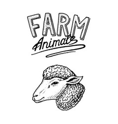 Farm animal head of a domestic lamb or sheep vector