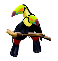 Keel-billed toucans sitting on the branch vector