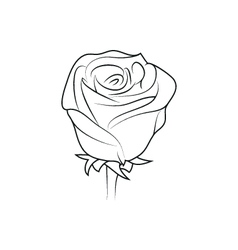 Rose flower simple black lined icon on white vector