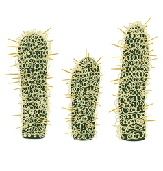Simmple Cactus collection isoleted on white vector image