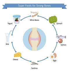Strong bones foods infographics vector image