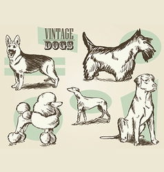 Vintage dog etchings vector