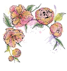 white background with watercolor peony flowers vector image