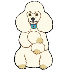 white poodle vector image vector image