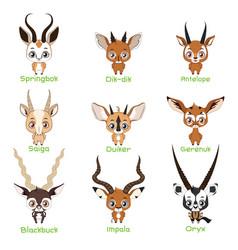 set antelope species vector image