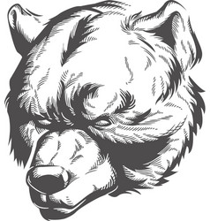 silhouette bear head engraving etching front view vector image
