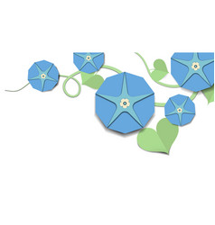 Blue morning glory flowers with leaves vector