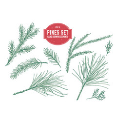 collection hand drawn pastel pine branch vector image