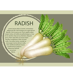 Fresh radish with text design vector