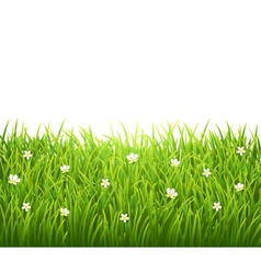 Green isolated grass with flowers on white vector image