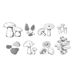 Hand drawn mushrooms vintage sketch porcini vector