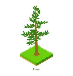 pine icon isometric style vector image