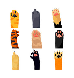different cat paws set collection various cute vector image