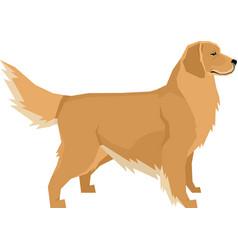 Dogs golden retriever vector