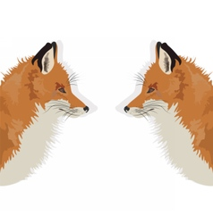 Fox on white background reflected vector image