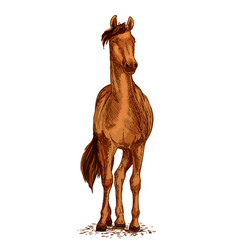 Horse brown mustang sketch symbol vector